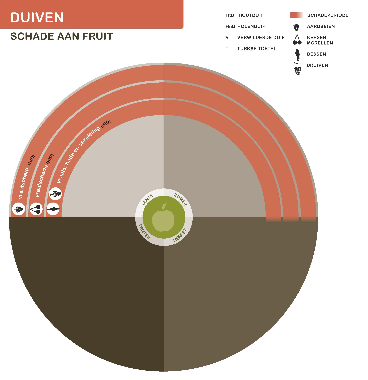 Duiven-fruit