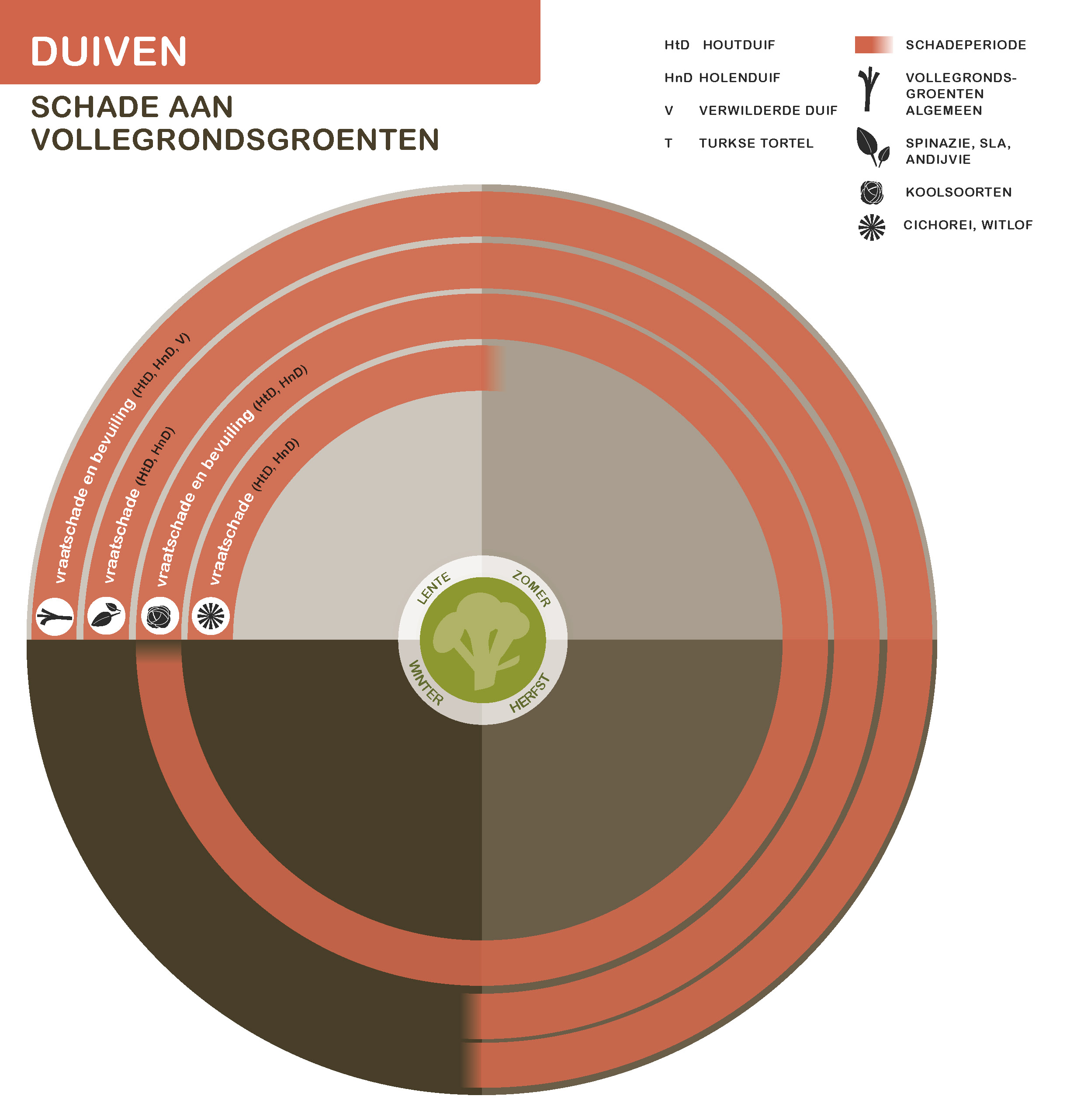 Duiven-volle-grond