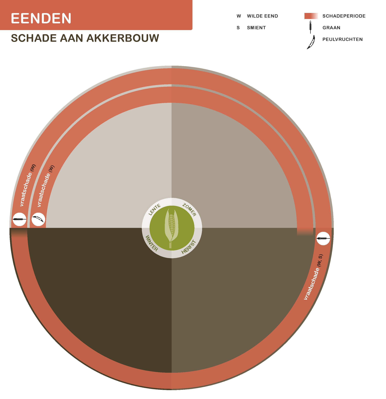 Eenden-21-7-2016_akkerbouw