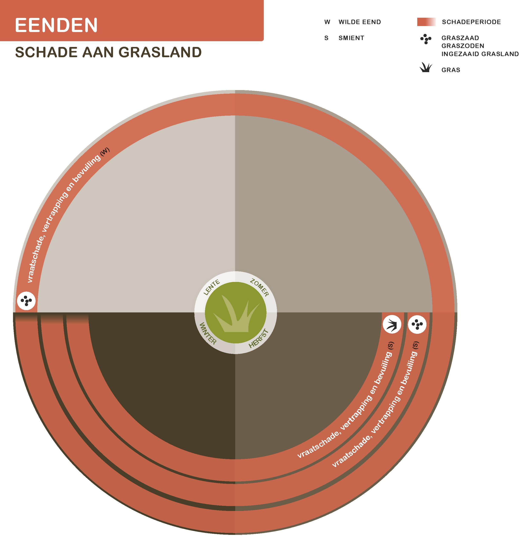 Eenden-21-7-2016_grasland