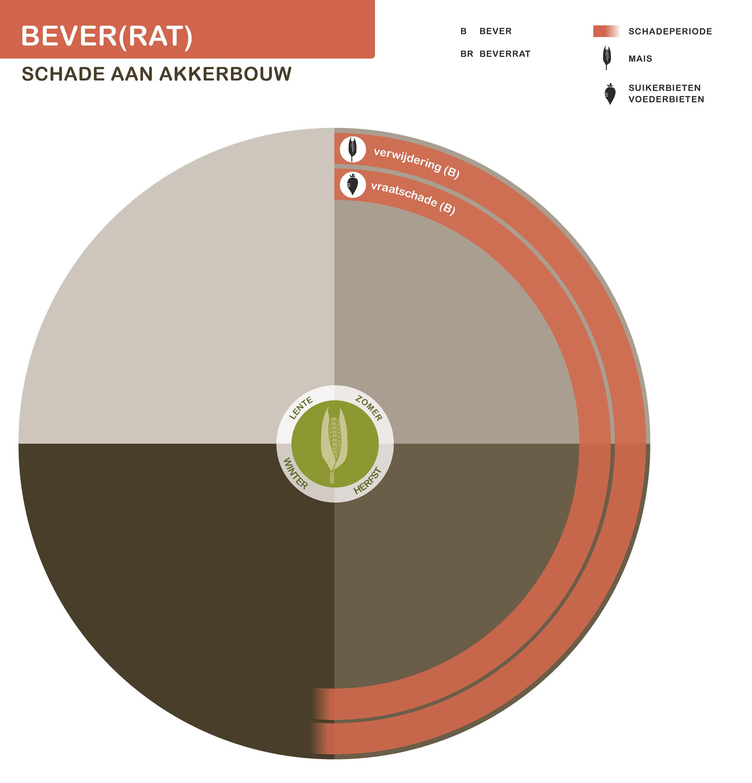 FPK-infogr-bever-akkerbouw-1