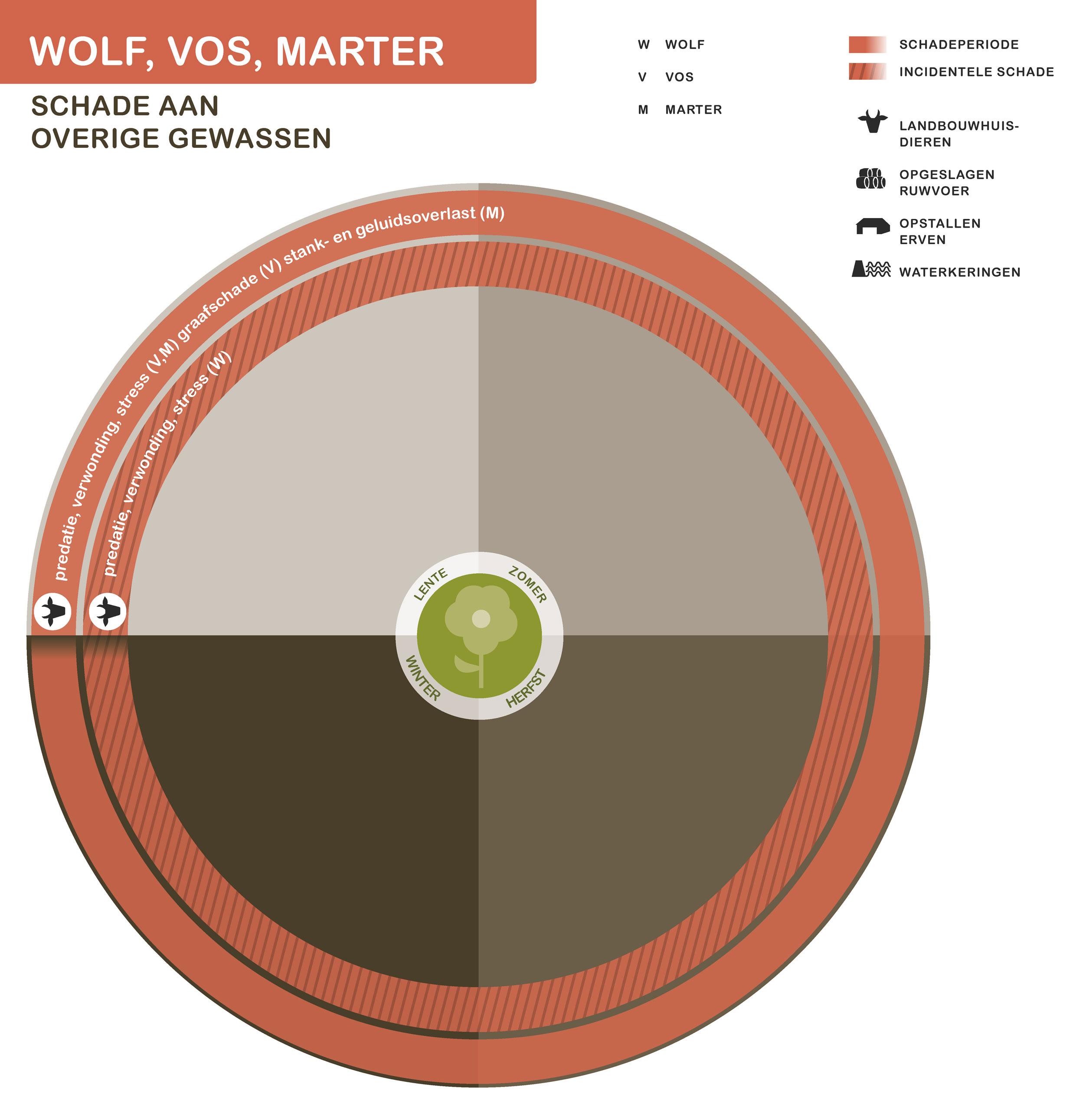 Module Wolven Vossen En Marterachtigen Bij12