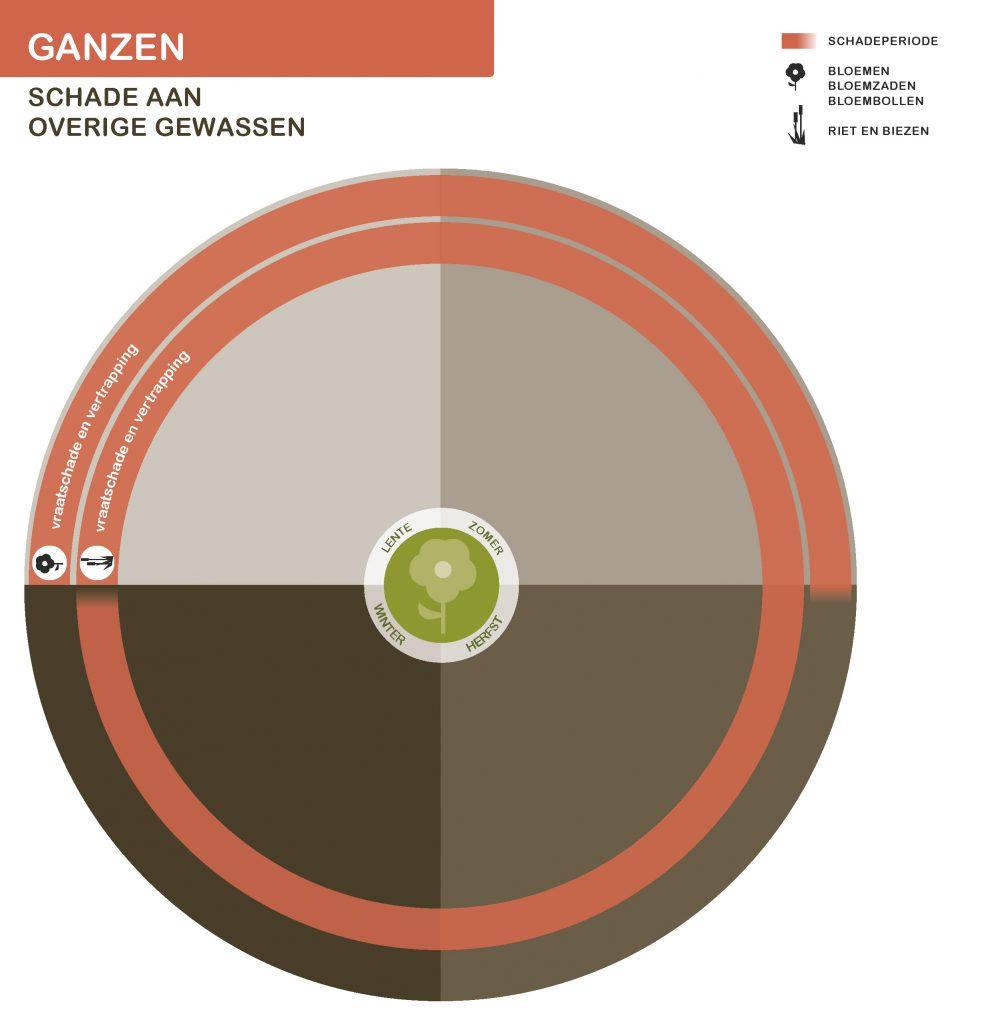 GanzenNwSeizoen-overige-gewassen-21-7-2016_Page_4-991x1024