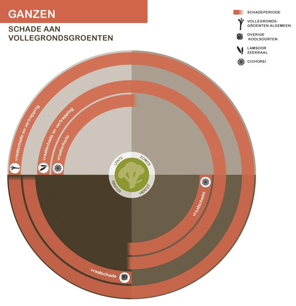GanzenNwSeizoen-vollegrondsgroenten-21-7-2016_Page_3-991x1024