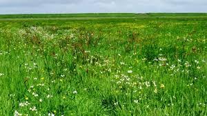 Sfeerafbeelding voor Niet bewerken grasland (20)