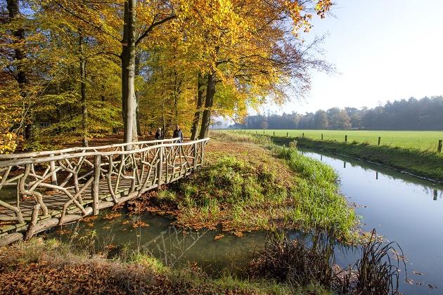Beukenbos in Nederland