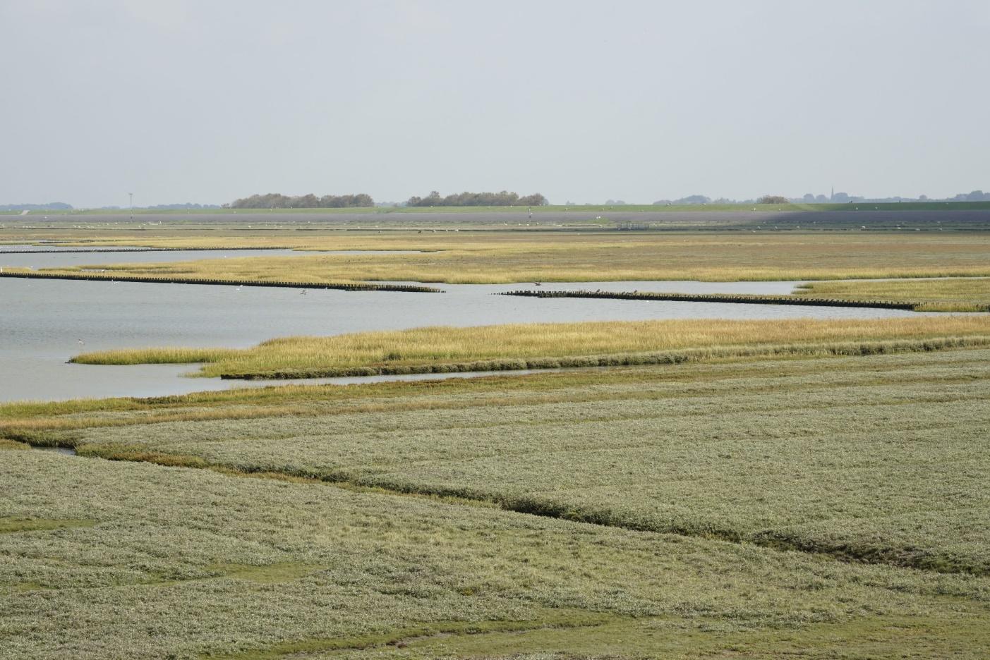 Afbeelding horend bij: Invloedsgebied van grondwateronttrekkingen voor droogteschade blijft 5 cm