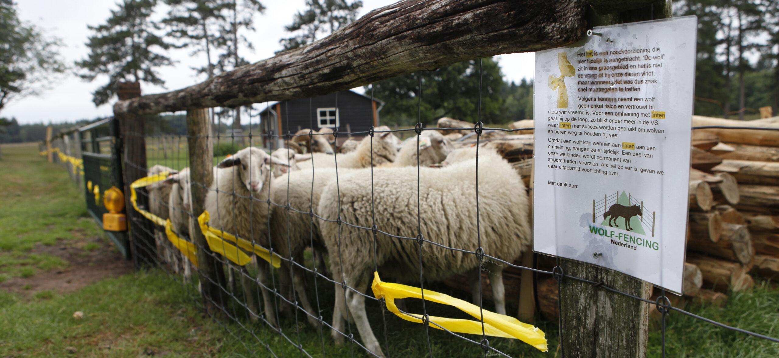 Stichting Wolf-Fencing Nederland heeft tijdelijke fladderlinten geplaatst bij de schaapskooi van Epe. Klik op de foto voor meer informatie. © BIJ12