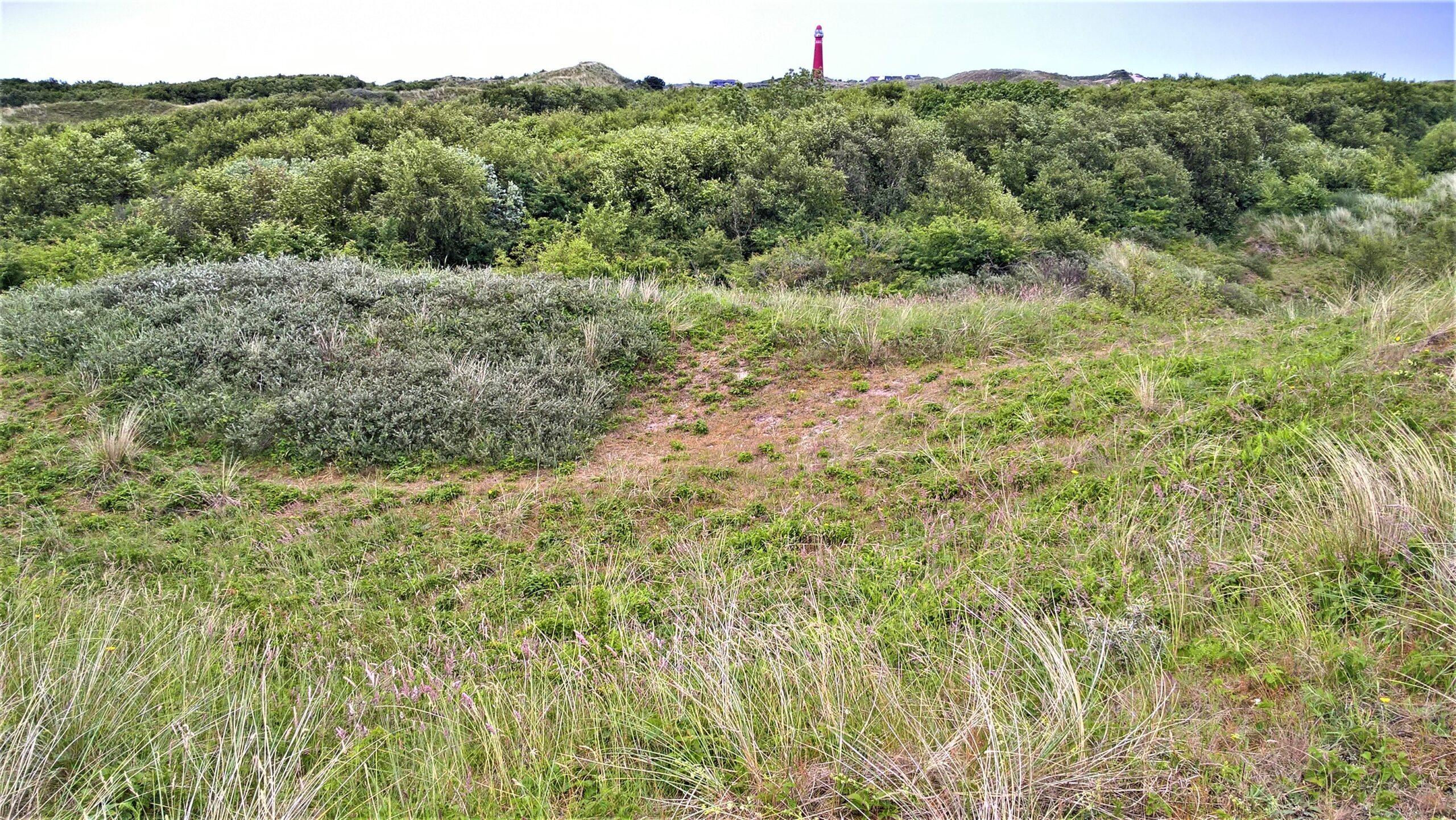 Landschap op Schiermonnikoog