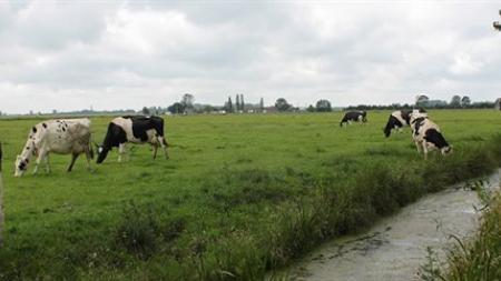 Sfeerafbeelding voor A11 Open grasland